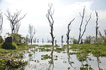 Nakuru meer in Kenia van Romy Oomen