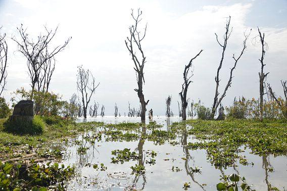 Nakuru meer in Kenia