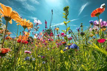 Bloemenveld tegenlicht van Kurt Krause