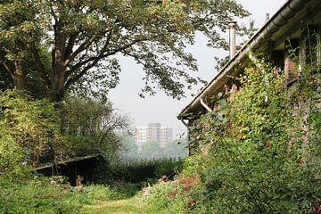 Rotterdam bij het quarantainestrandje  van Tineke Mols