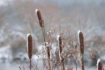 Sigaren in de sneeuw von Miranda Zwijgers