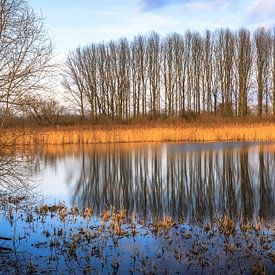 Oude Rijn Pannerden van René Rollema