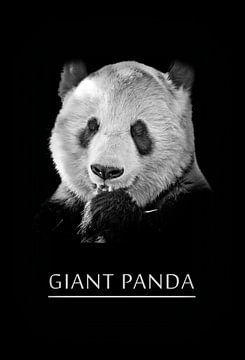 Giant Panda van Leopold Brix