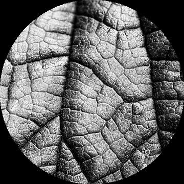 Nerven van een blad in zwart wit van Birgitte Bergman