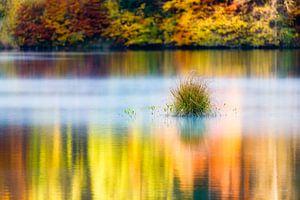 Stilte aan het meer
