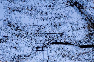 Bladeren in de lucht van Barbara Brolsma