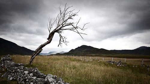 einsamen Baum im schottischen Hochland von