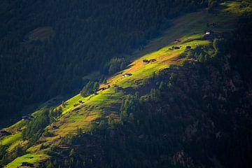 Laatste zonnestralen op bergweide van