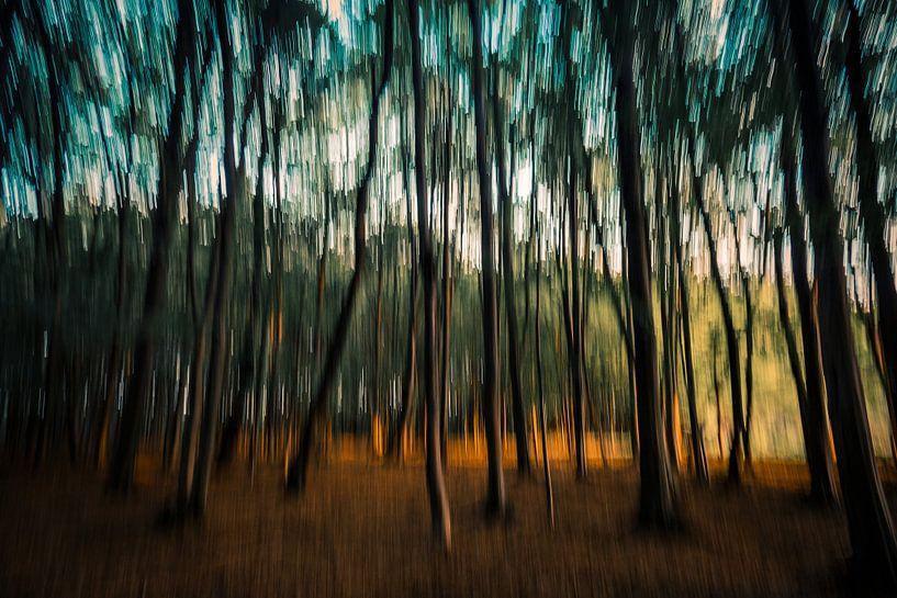 Dansende bomen van Anneke Hooijer