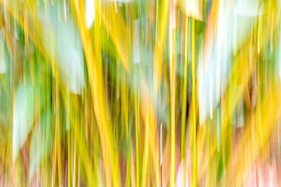 Bamboe in India van Nick Janssens