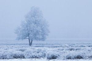 Winters berijpte boom tussen blauw en wit van