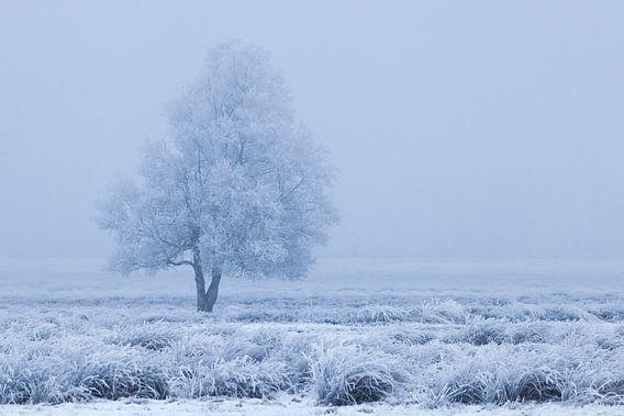 Winters berijpte boom tussen blauw en wit