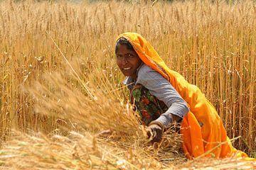 Vrouw in graanveld in India van Gonnie van de Schans
