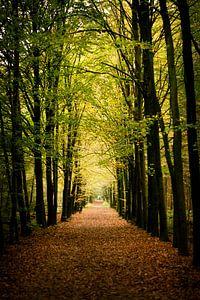 Herbst im Wald. von mandy vd Weerd