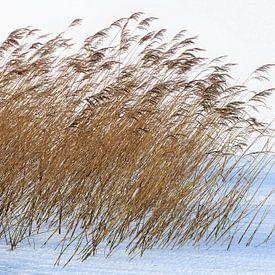 Minimalistisch winters landschap van Peter Bolman