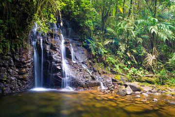 Wasserfall im tropischen Regenwald von Cobán, Guatemala von Michiel Dros