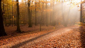 Herbstimmung im Gegenlicht van Kurt Krause