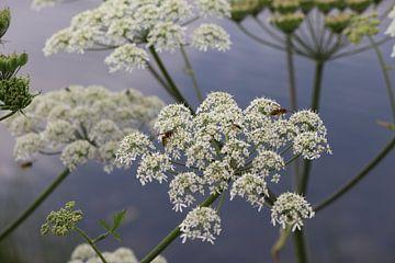 Wespen op bloemen van Henri Bekker