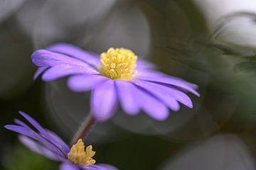 Blumen Teil 93 von Tania Perneel
