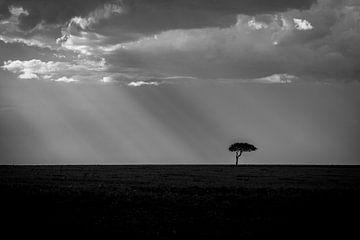 Landschaft Masai Mara Sonnenstrahlen und Baum in Schwarz-Weiß von Dave Oudshoorn