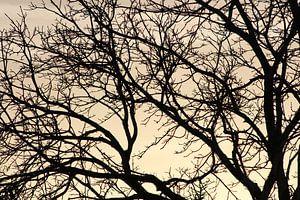 boom met prachtigen achtergrond van