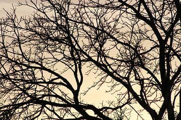 boom met prachtigen achtergrond van milan willems
