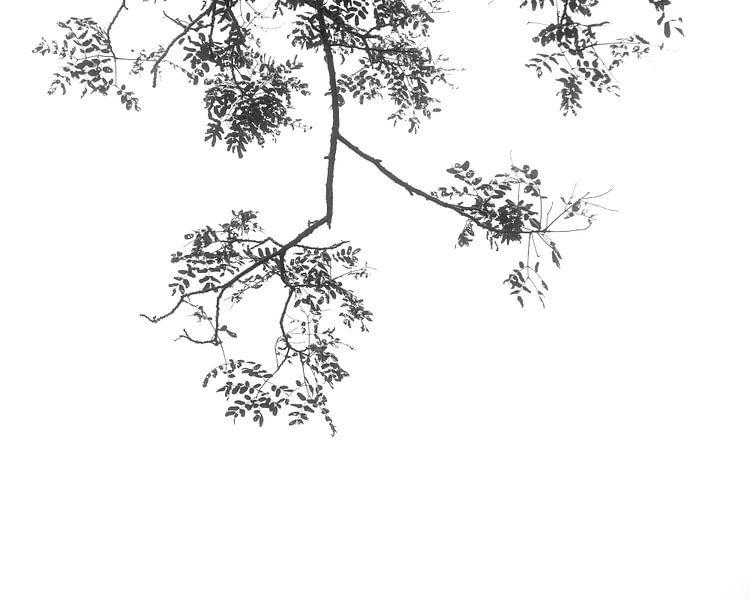 Bladeren van Johan Zwarthoed