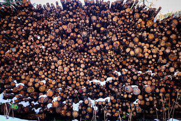 Mehr Holz von Ginkgo Fotografie