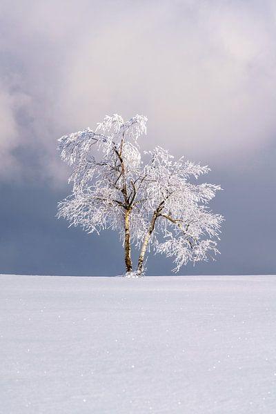 Einsamer Baum in einer Winterlandschaft von Deimel Fotografie