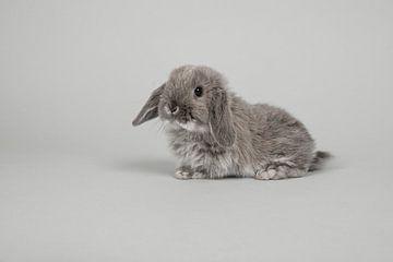 Het grijze konijntje van Elles Rijsdijk