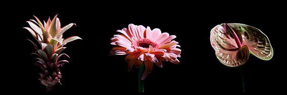 Pink Flowers in Black