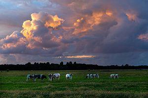 Zomers landschap foto van koeien in de polder met prachtige wolkenlucht.