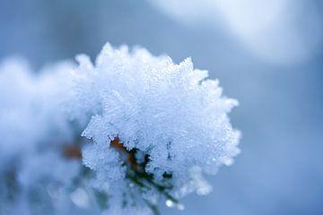 Winterfoto, macrofoto van sneeuw in de Drenthe van Karijn Seldam