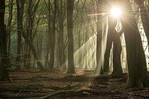 Het Speulderbos in de ochtend van