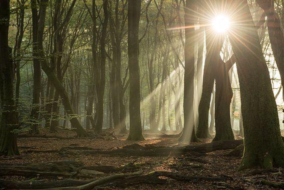 Het Speulderbos in de ochtend van Gerry van Roosmalen