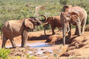 Olifanten spelen met water van Map of Joy