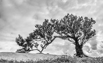 Einsamer Baum von Steven Driesen