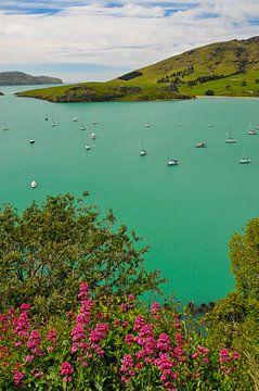 Blauw water in een baai in Nieuw-Zeeland van Denis Feiner