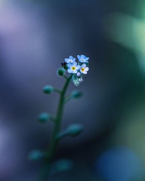 Don't forget this flower! van Niels Tichelaar