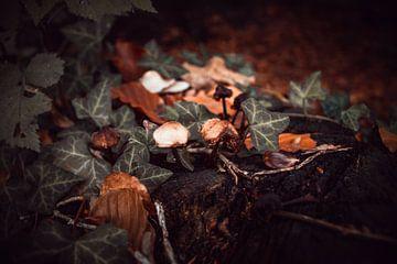 paddenstoelen van b.dutch