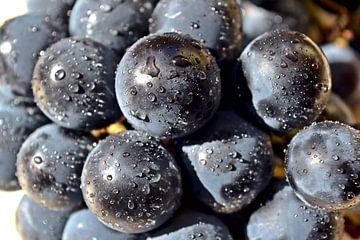 Blauwe druiven na een regenbui van Heiko Kueverling