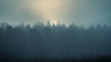 Nebliger Wald von Johan Rosema Fotografie