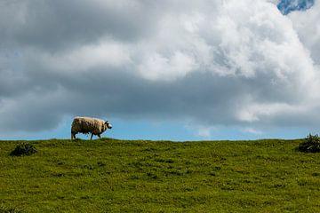 Schafe über den Deich von Marjolijn Maljaars
