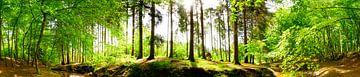 Wunderschöne Szene in der Natur von Günter Albers