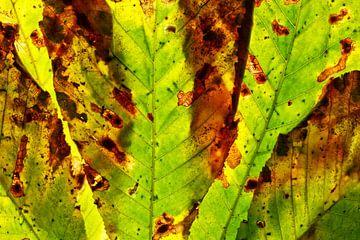 Herbstblätter 14 von Henk Leijen