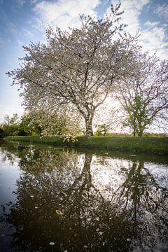 Boom vol bloesem met een lentezon van Michel Geluk