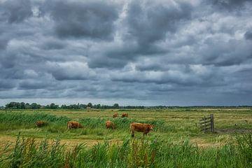 Koeien onder een bewolkte lucht van Peet Romijn