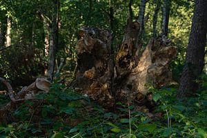 gebroken boom