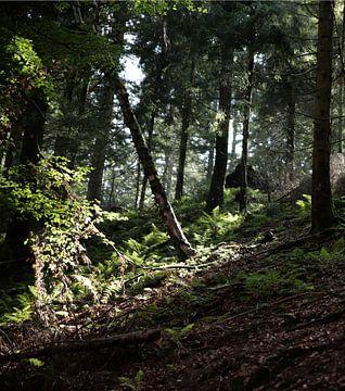 Mysteriöser Wald von simone swart