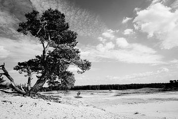 In het zand geworteld van Marianne Rouwendal